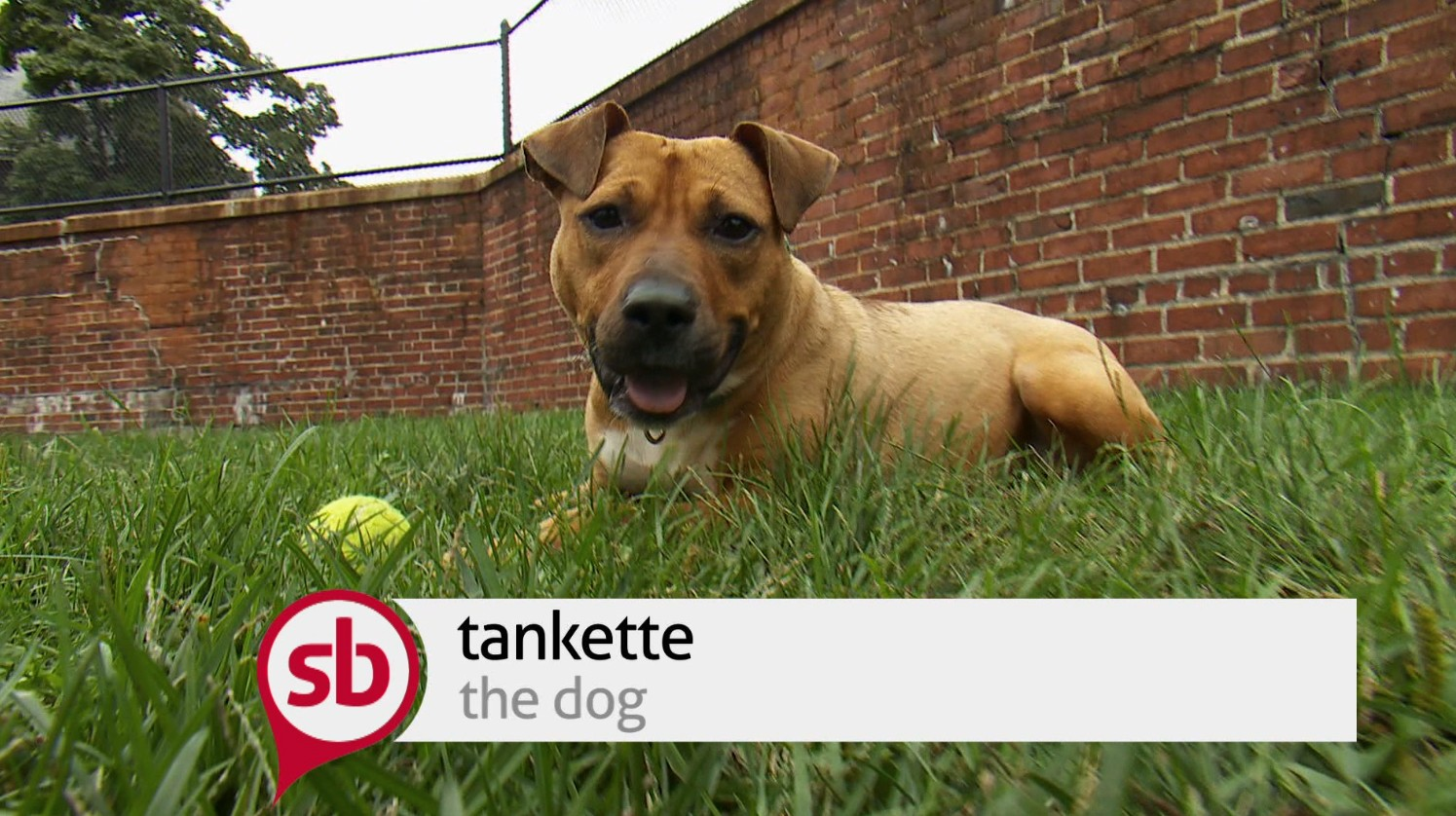 Save a Pet : Tankette
